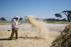 African artisanal grains and other ancient whole foods are stores of natural nutrition (www.africanepicure.com)