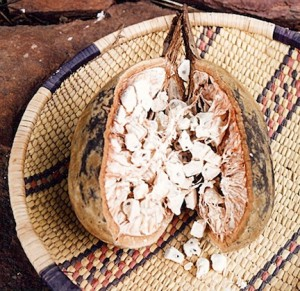 baobab fruit - african superfood recipes and information (www.africanepicure.com)