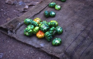 African vegetables are essential in African cooking, recipes and food. (www.africanepicure.com)