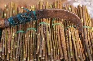neem branches make natural African toothbrushes (www.africaepicure.com)