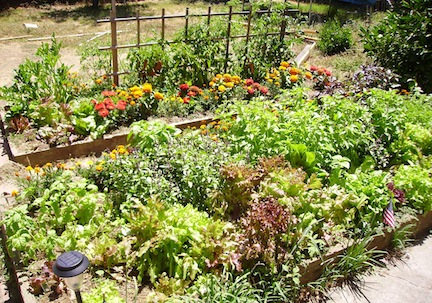 Permaculture gardens and other innovative design technologies make our gardens less work and more productive (www.africanepicure.com)