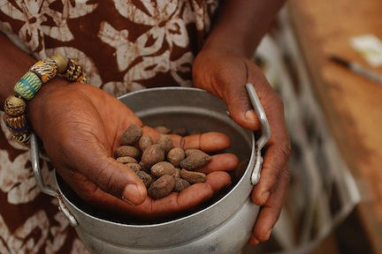 shea nut and shea butter and other natural beauty recipes from www.africanepicure.com